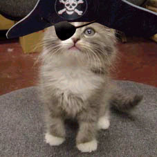 Pirate cat from the web